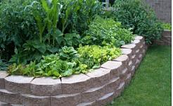 Articles about Gardening Tips, Tricks & Ideas
