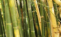 Plant Care for Ornamental Grasses & Bamboo