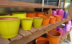 Container Gardening Articles