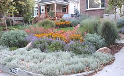 Articles about Waterwise Gardening