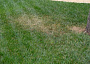 Dealing with lawn hot spots.