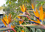 Bird of Paradise Monthly Plant Care
