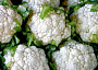 Cauliflower Plant Care