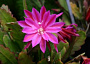 Epiphyllum Monthly Plant Care