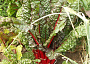 Swiss Chard Plant Care